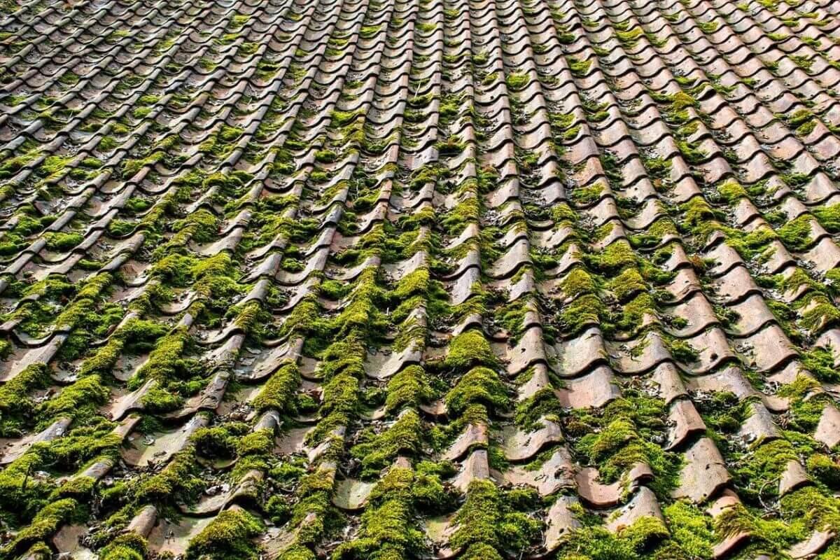 mech na dachu